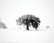 Slough_Pechanga_-86-Edit
